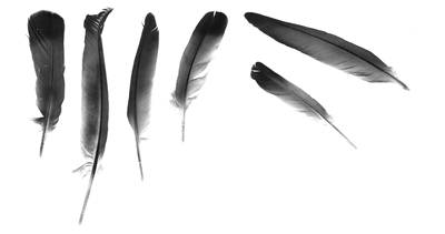 Picture Of Feathers For Writing