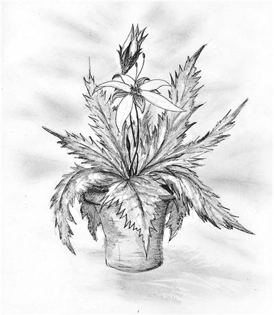 Picture Of Pencil Drawing Of Flower